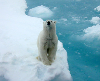 polar bear ice berg