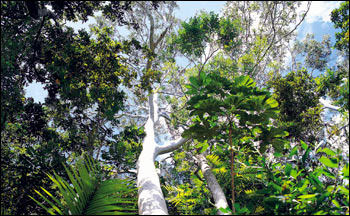 rainforest canopy layer