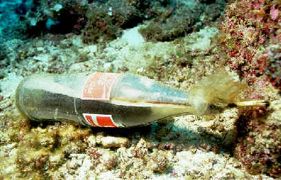 coral reef Fishing with explosives or cyanide-