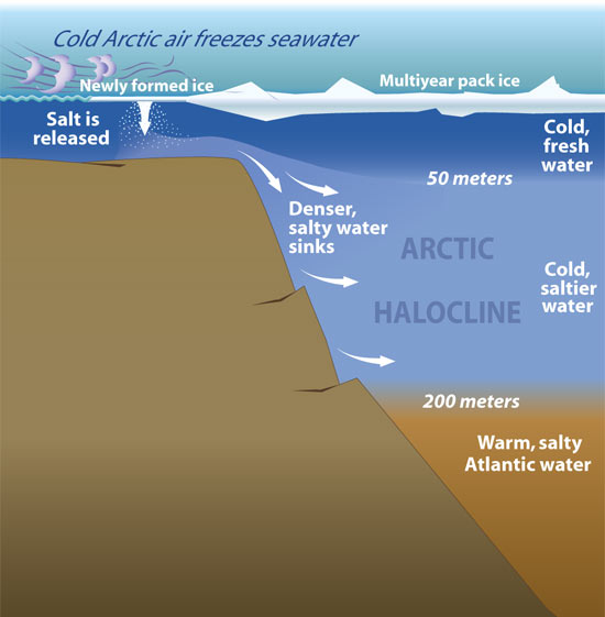 THE ARCTIC HALOCLIINE