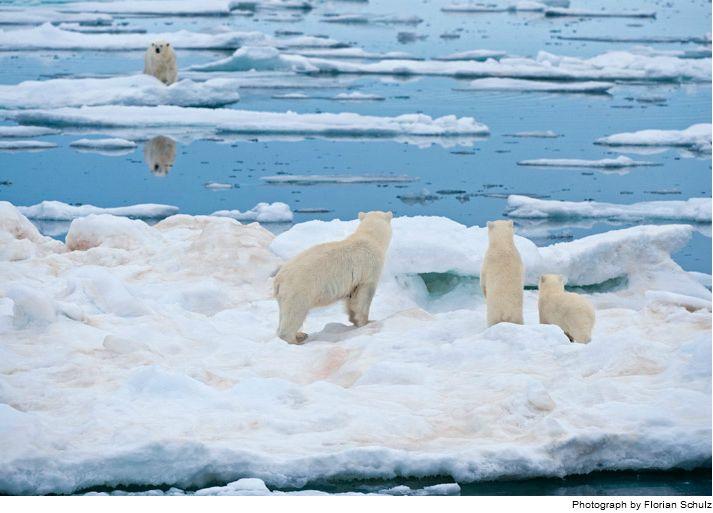 icepolar.JPG