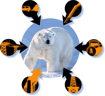 Polar Bears risks threats