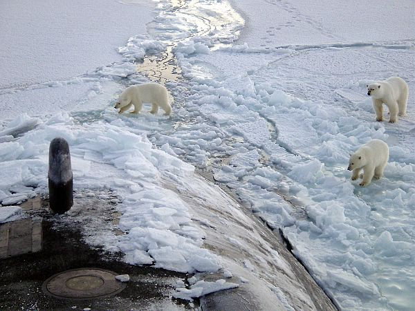 polar bears submarine
