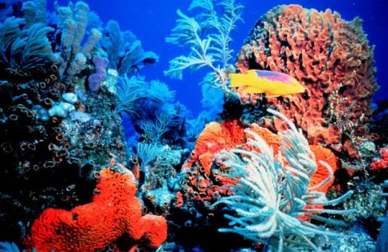 Florida Coral Reefs